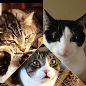 (My children, for now – Shadow, Wade, Oreo)
