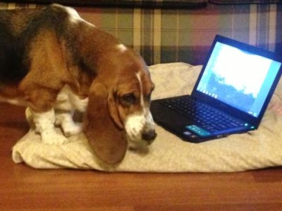 Don't Hound Tech Support