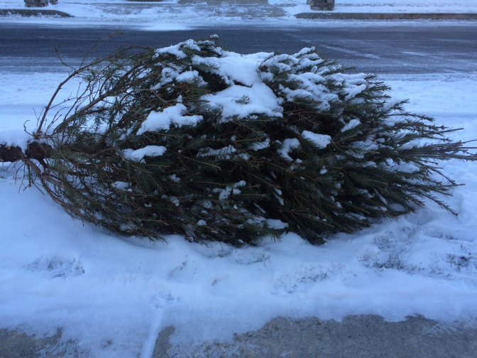 It's Time to Take Your Christmas Tree Down